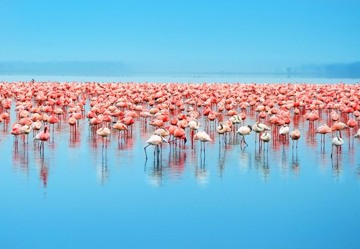 Flamingo's in Lake Nakuru National Park