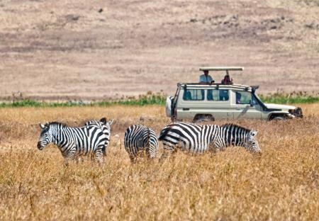 Zebra's tijdens safari in Ngorongoro
