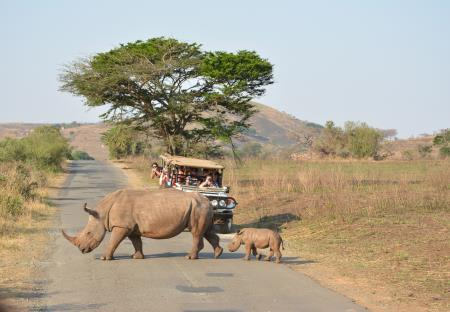 Safari Hluhluwe