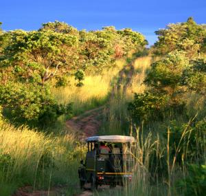 offroad in het Kruger National Park