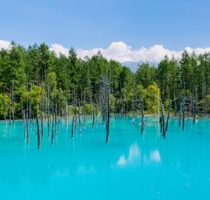 Blue pond in Furano, Japan