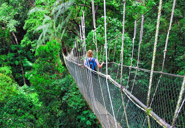 Canopy Walkway in de jungle van Taman Negara