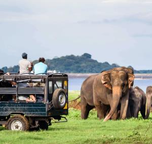 Op safari in Uda Walawe National Park in Sri Lanka