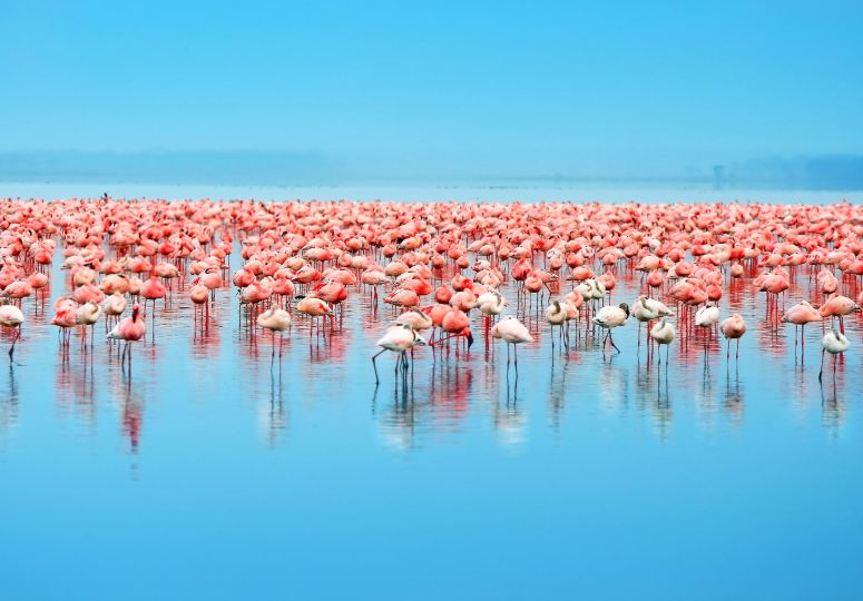 Flamingos in Lake Nakuru en Lake Elementaita