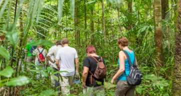 Jungle wandeltocht in Suriname